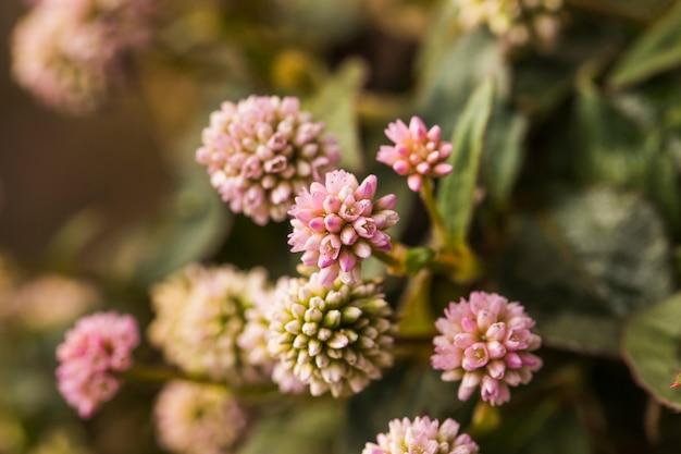 Schöne rosa frische wiesenblumen Kostenlose Fotos