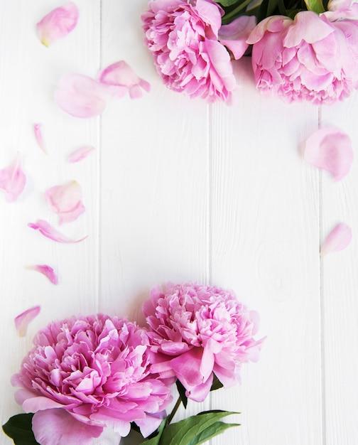 Schöne rosa pfingstrosenblumen Premium Fotos