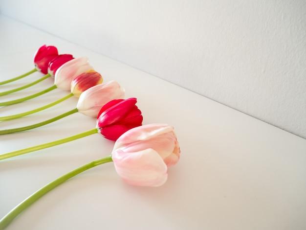 Schöne rosa tulpengrenze lokalisiert auf weißem hintergrund Premium Fotos