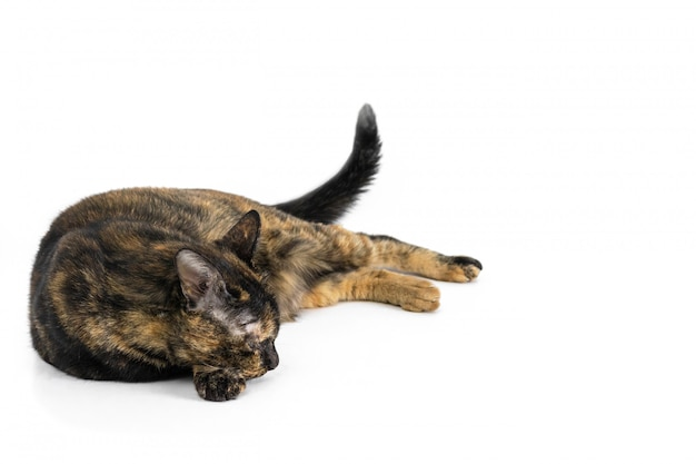 Schöne schwarze katze und gelbes muster, das an lokalisiert auf weißem hintergrund schläft. Premium Fotos