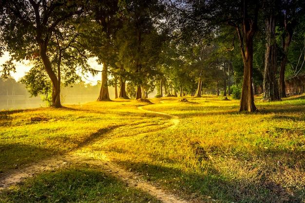 Schöne sommerlandschaftswaldspur Premium Fotos