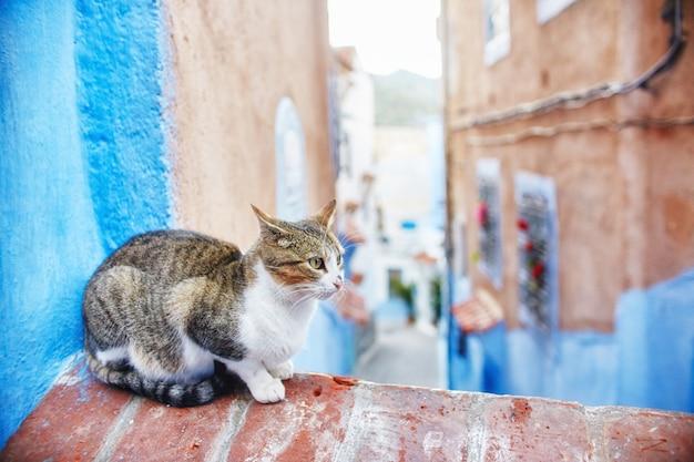 Schöne streunende katzen laufen in den straßen von marokko Premium Fotos