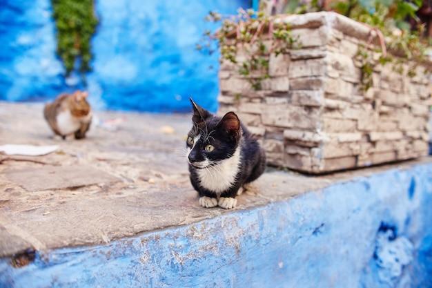 Schöne streunende katzen schlafen und gehen auf den straßen Premium Fotos