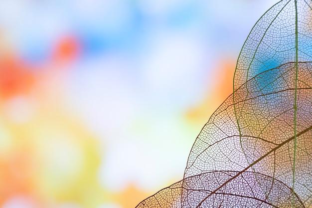 Schöne transparente blaue blätter Kostenlose Fotos
