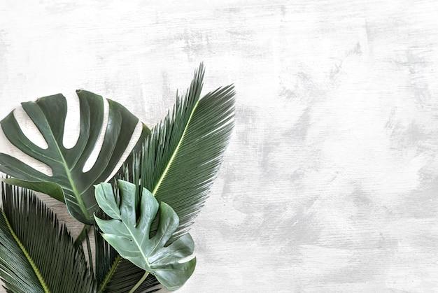 Schöne tropische blätter auf weiß. Kostenlose Fotos
