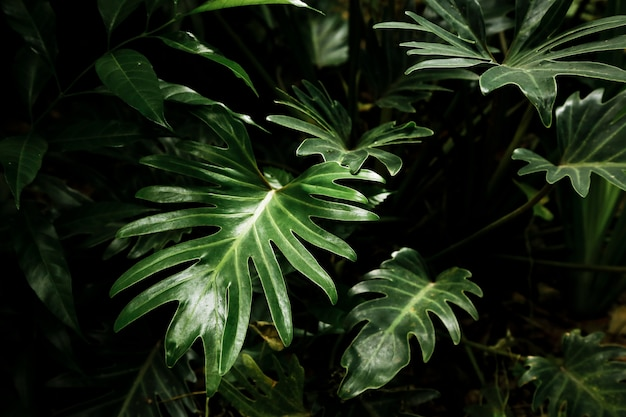 Schöne tropische blätter im wald Kostenlose Fotos