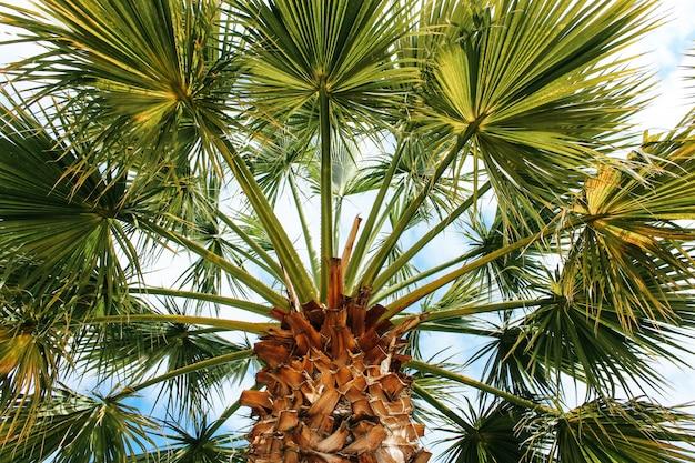 Schöne tropische kokosnuss-palme auf blauem himmel Kostenlose Fotos