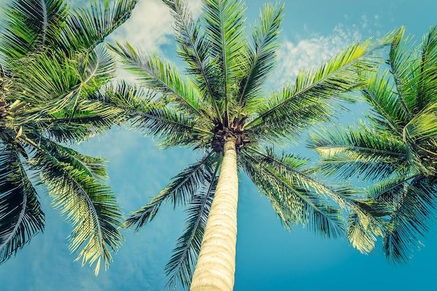 Schöne tropische palme der weinlese - weinlesefilter Kostenlose Fotos