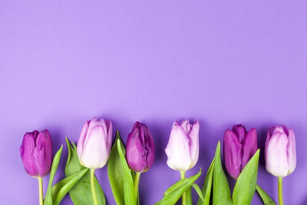 Schöne tulpe des frühlinges vereinbarte in folge über purpurroter oberfläche Kostenlose Fotos