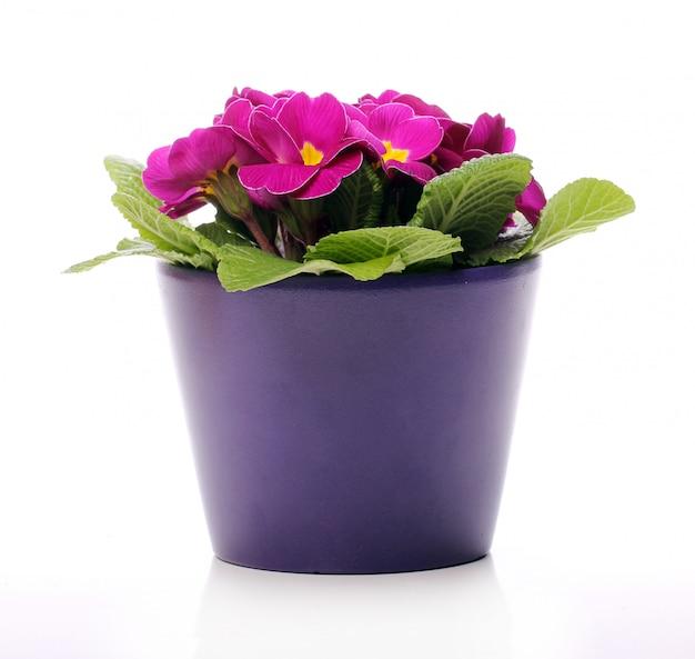 Schöne violette blüten Kostenlose Fotos