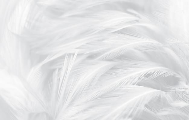 Schöne weichheit weiße und graue federn vintage texturlinie Premium Fotos