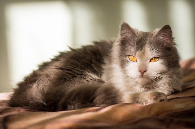 Schöne weiße graue katze Premium Fotos