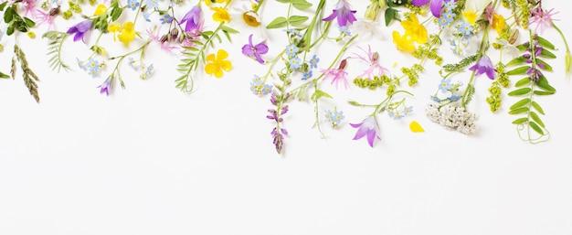 Schöne wilde blumen auf weißem hintergrund Premium Fotos