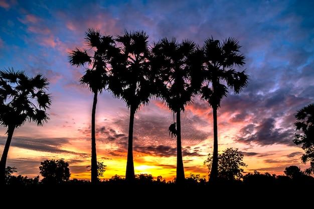 Schöne wirbelpalme im sonnenaufganghintergrund. Premium Fotos