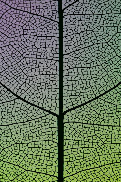 Schöner abstrakter grüner herbstlaub Kostenlose Fotos