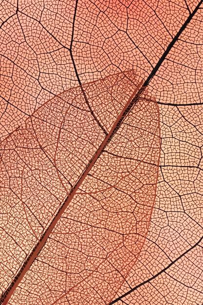 Schöner abstrakter herbstlaub Kostenlose Fotos