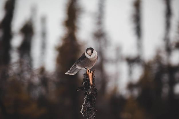 Schöner brauner vogel auf einem baum Kostenlose Fotos