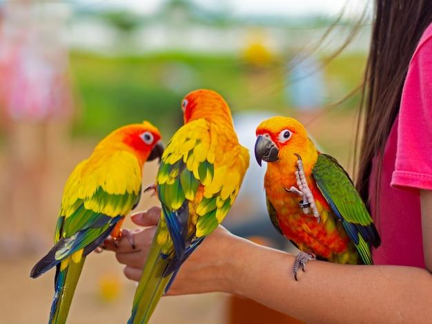 Schöner bunter papagei, der auf menschlichem finger sitzt. Premium Fotos