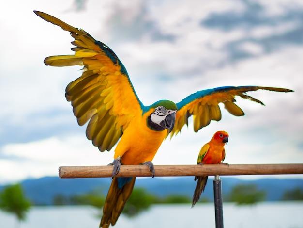 Schöner bunter papagei Premium Fotos