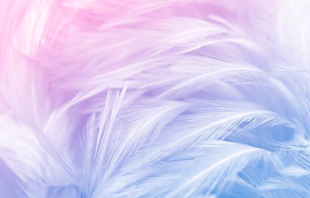 Schöner farbverlauf der blauen federn Premium Fotos