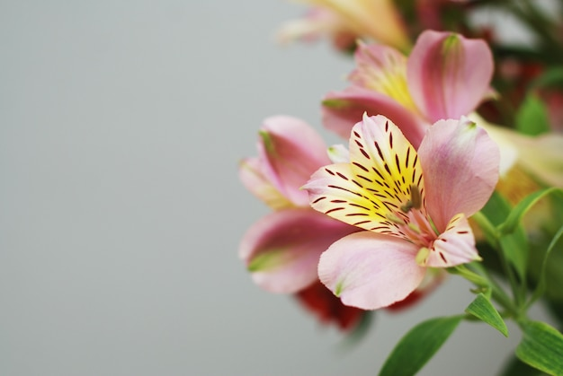 Schöner frühlingsrosablumenblumenstrauß. Premium Fotos