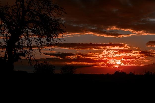 Schöner himmel des brennenden orange und purpurroten sonnenuntergangs. Premium Fotos