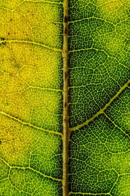 Schöner hintergrund eines exotischen baumblattes mit interessanten texturen Kostenlose Fotos