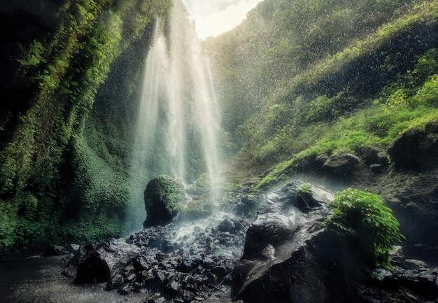 Schöner madakaripura-wasserfall, der auf felsigen bach fließt Premium Fotos