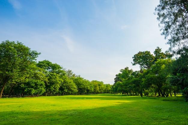 Schöner park der parkszene öffentlich mit grüner rasenfläche Premium Fotos