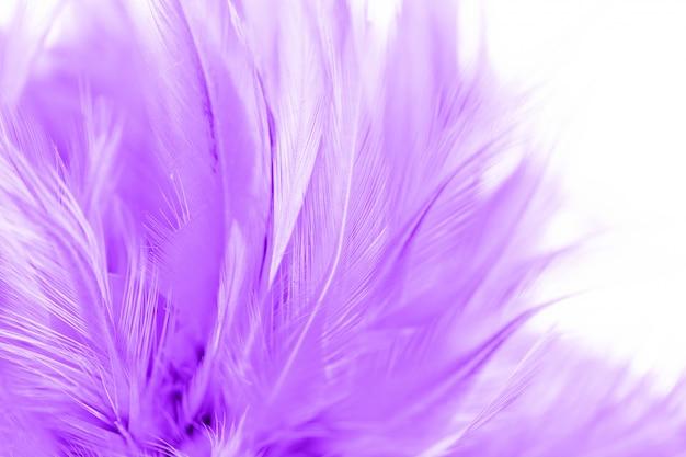 Schöner purpurroter hühnerfeder-beschaffenheits-zusammenfassungshintergrund. weiche und unscharfe farbe Premium Fotos