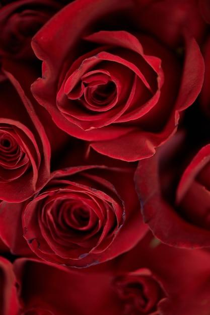 Schöner rosenstrauß Premium Fotos