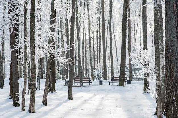 Schöner schneebedeckter park im winter. bäume im schnee und frost. gefriertag. Premium Fotos