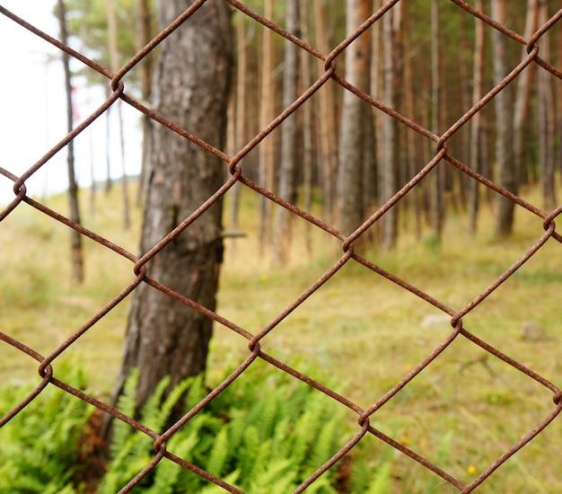 Schöner schuss der bäume im wald hinter dem metallzaun Kostenlose Fotos