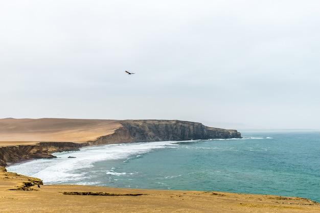 Schöner schuss der klippe nahe dem meer mit einem vogel, der unter einem bewölkten himmel fliegt Kostenlose Fotos