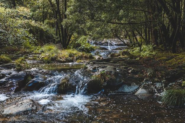 Schöner schuss des fließenden stromwassers im wald Kostenlose Fotos