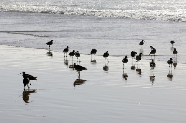 Schöner schuss einer herde schwarzer vögel im ozean mit ihrem spiegelbild im wasser Kostenlose Fotos
