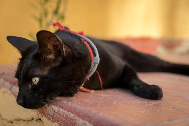 Schöner schuss einer schwarzen katze, die auf der steinoberfläche in der straße an einem sonnigen tag liegt Kostenlose Fotos