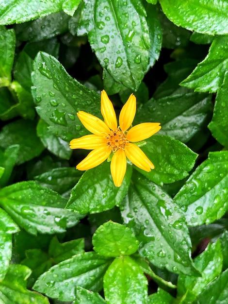 Schöner schuss einer waldsonnenblume, die blüht Kostenlose Fotos