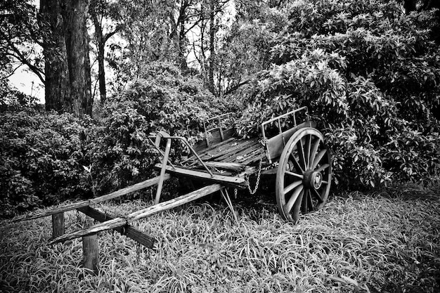 Schöner schuss eines alten gebrochenen pferdewagens nahe bäumen in schwarzweiss Kostenlose Fotos