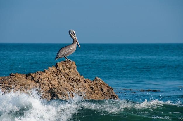 Schöner schuss eines grauen pelikans, der auf einem felsen mit seewellen ruht, die auf den felsen schlagen Kostenlose Fotos