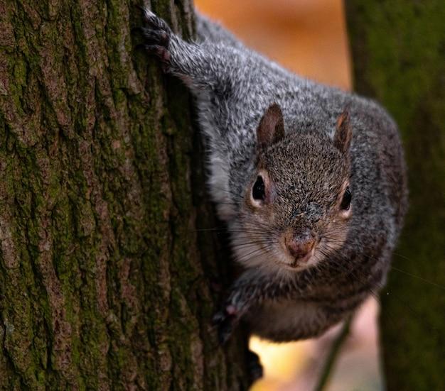 Schöner schuss eines niedlichen fuchs eichhörnchens hinter dem baum Kostenlose Fotos