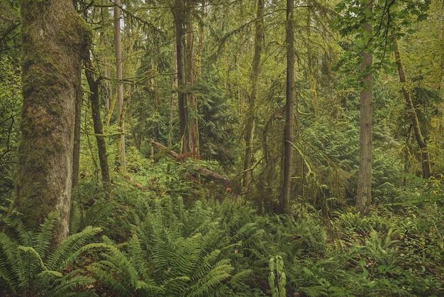 Schöner schuss eines waldes mit moosigen bäumen und grünblättrigen pflanzen Kostenlose Fotos