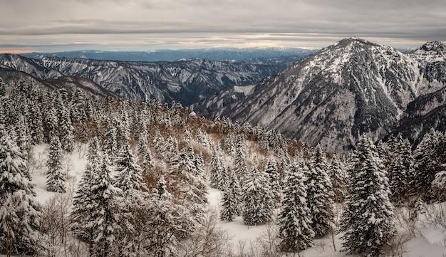 Schöner schuss von bewaldeten bergen, die im winter mit schnee bedeckt sind Kostenlose Fotos