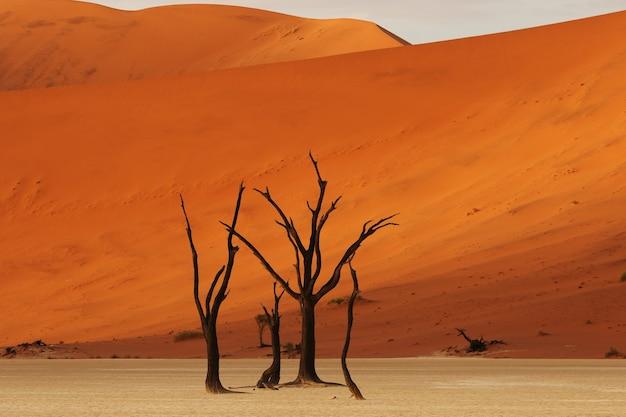 Schöner schuss von nackten wüstenbäumen mit einer riesigen orange düne Kostenlose Fotos