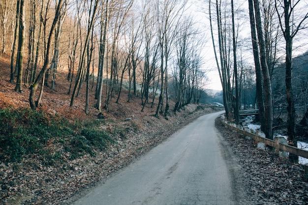 Schöner schuss von trockenen kahlen bäumen nahe der straße in den bergen an einem kalten wintertag Kostenlose Fotos