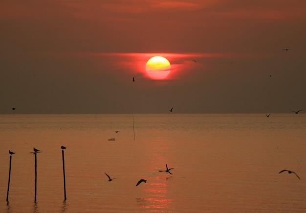 Schöner sonnenaufganghimmel über dem golf von thailand mit dem schattenbild vieler frühen vögel Premium Fotos