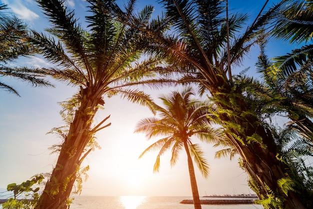 Schöner tropischer strand mit palmen. Premium Fotos