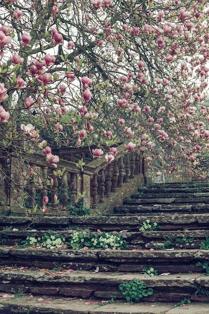 Schöner vertikaler schuss einer alten steintreppe nahe einem kirschblütenbaum Kostenlose Fotos