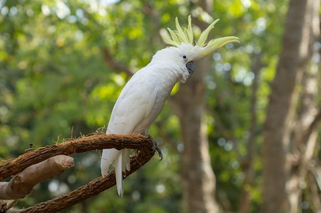 Schöner vogel, nahaufnahme gelb-mit haube cockatoo Premium Fotos