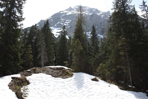 Schöner wald mit vielen tannen mit hohen schneebedeckten bergen Kostenlose Fotos